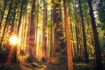 redwoods092717
