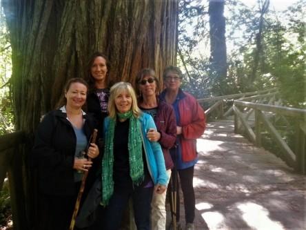 Redwood Hike California North Coast