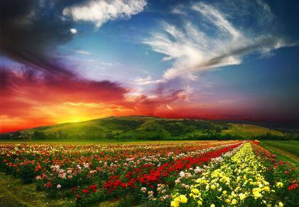 blossom-5499x3820-landscape-sunset-scenery-flowers-hd-5k-3556