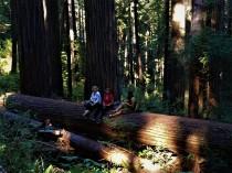 Taking a break on Redwood Forest Hike