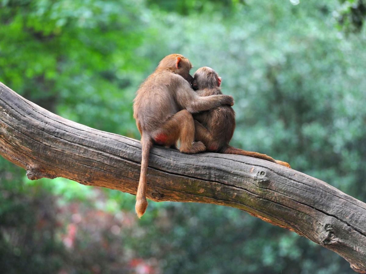 A Tale of Two Monkeys