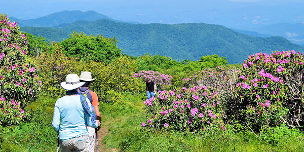 craggy-gardens-trail