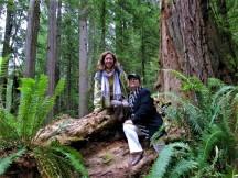Redwood Forest Hike