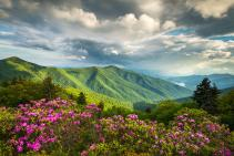 asheville-nc-blue-ridge-parkway-spring-flowers-dave-allen